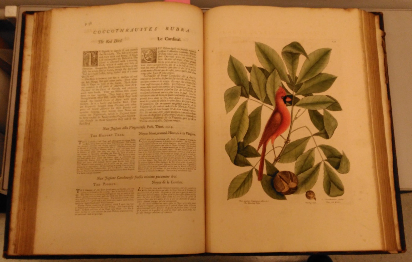 Page from 'Natural History of Carolina'