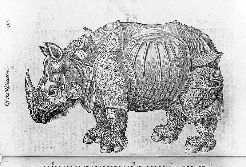 Illustration from Edward Topsell's The Historie of foure-footed beastes, borrowed by Alexander Grindlay, of Madderty, on 12 December 1766